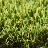 Lush Lawns Flourish